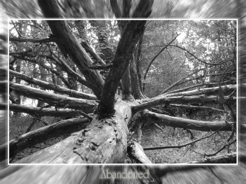 arbre par terre mort.jpg